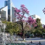 La Municipalidad presentará su programa de oferta turística «Santiago Ciudad»